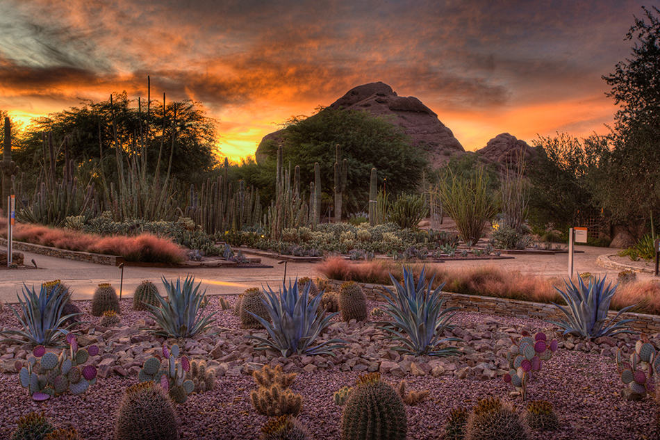 pic3 Top 10 Phoenix Attractions